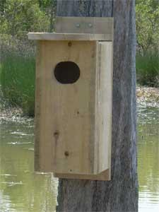 Tel woodworking wood duck nesting box wood duck nesting box publicscrutiny Choice Image